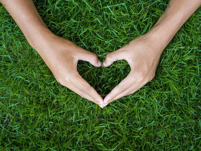 male hand in shape of heart on green grass field background